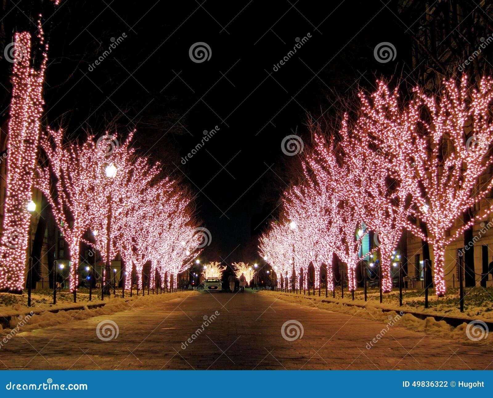 Lit Up Christmas Trees Stock Photo - Image: 49836322