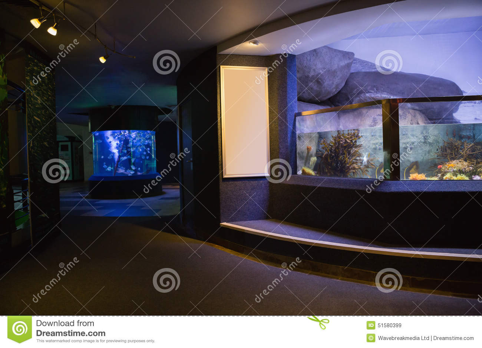 Lit Up Fish Tank Stock Image Image Of Fish Environment 51580399