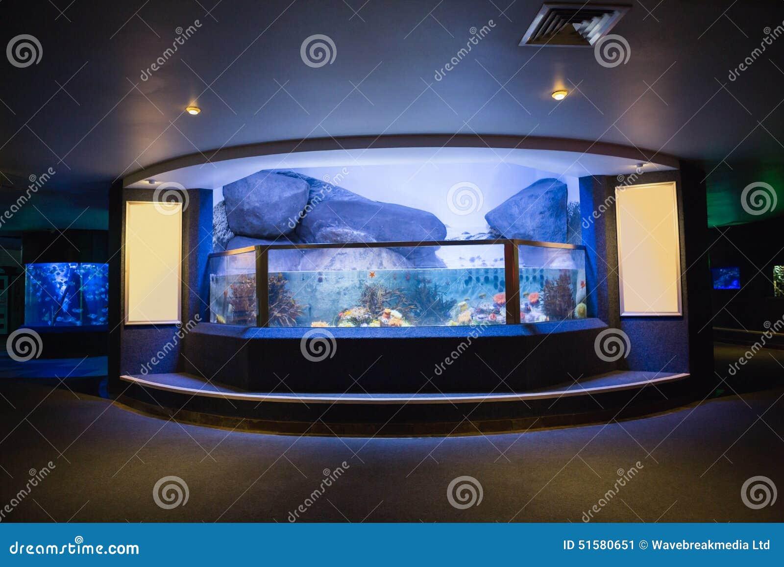 Lit Up Fish Tank Stock Image Image Of Biology Aquarium 51580651