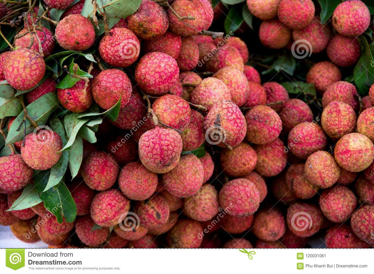 Litchi fruit for trade, sell, design