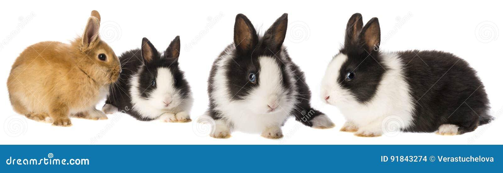 Lite kaniner