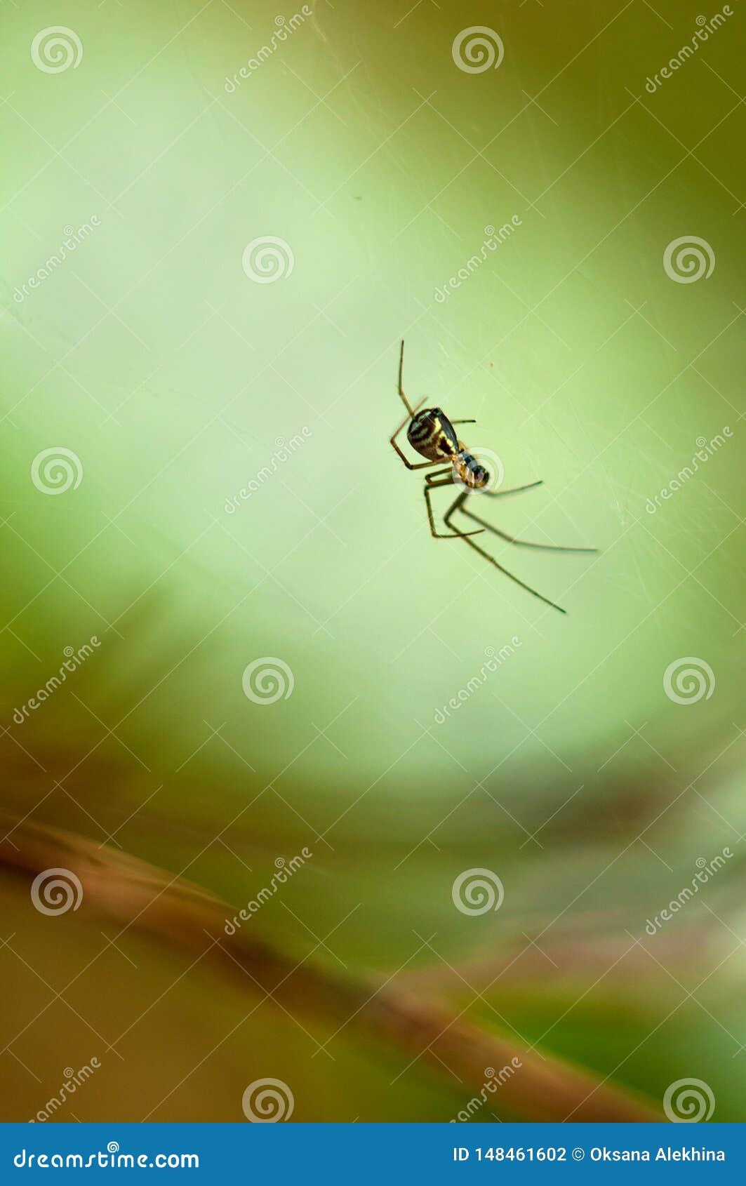 Lite sitter spindeln på rengöringsduken N?rbild