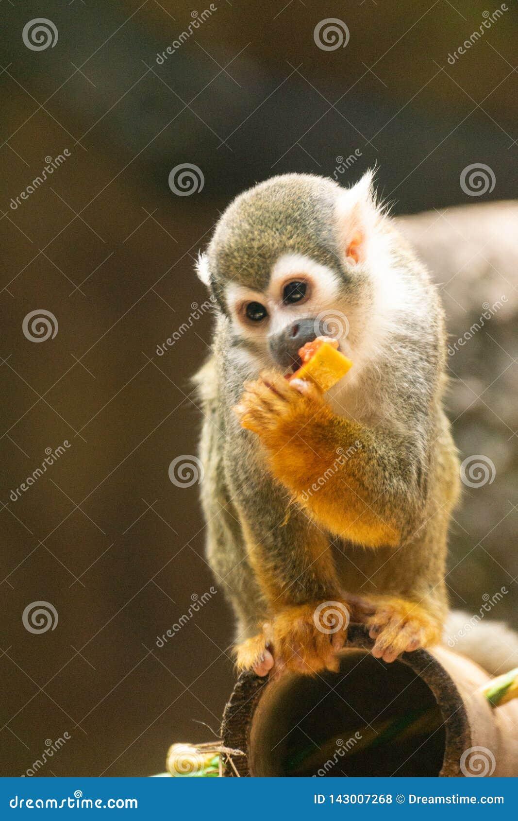 Liten apa som äter frukt på träd