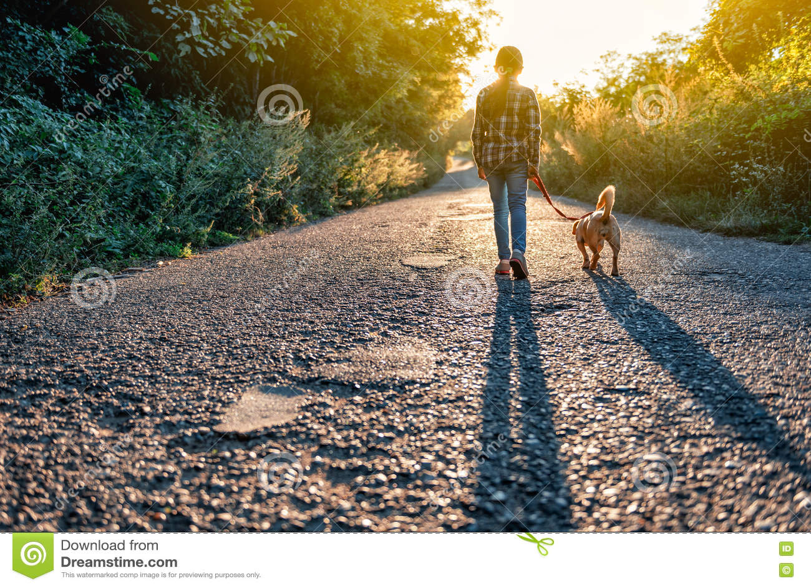 Liten flicka som går med hennes hund på vägen