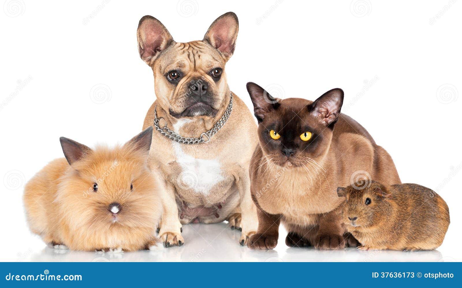 Liten grupp av husdjur