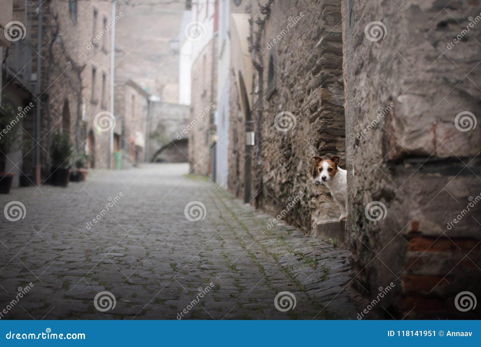 Liten hund i den gamla staden Ett husdjur i staden