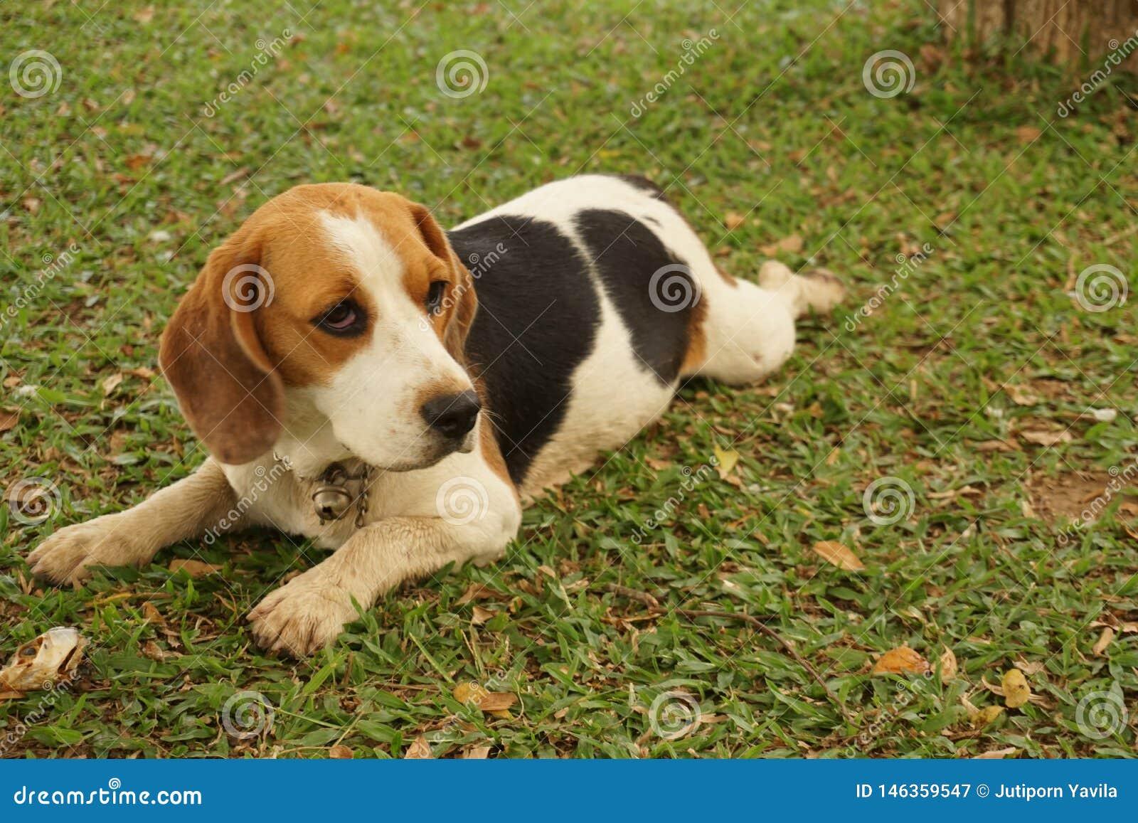 Liten hund och hans lekplats