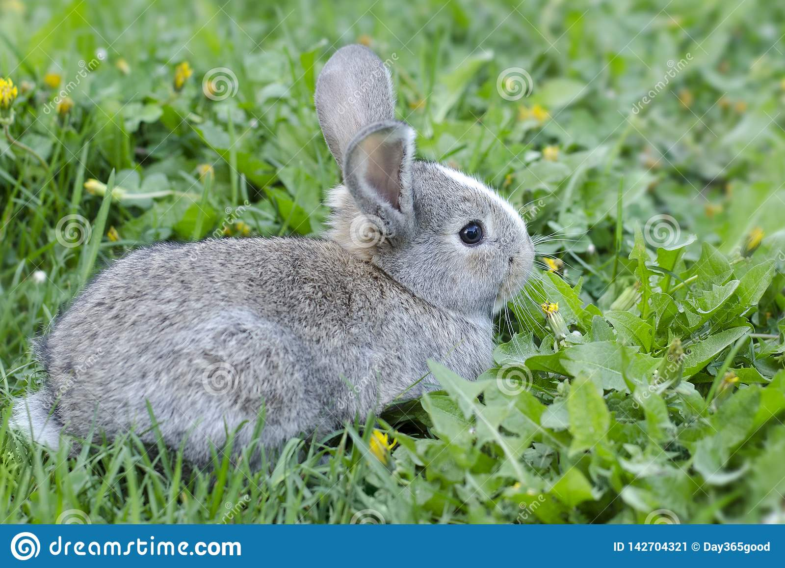 Liten kanin i grönt gräs Kanin i ängen Haren sitter i det gröna gräset