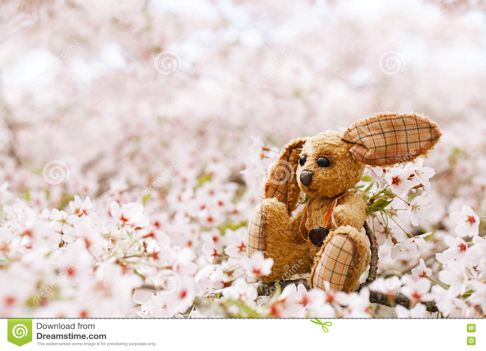 Liten kanin i vår med den körsbärsröda blomman sakura för blomning