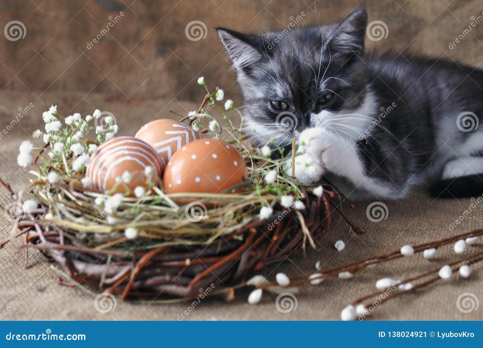 Liten kattunge för gulliga grå färger bredvid påskäggen den naturliga röda färgen med det grafiska trycket av vit målarfärg i ett