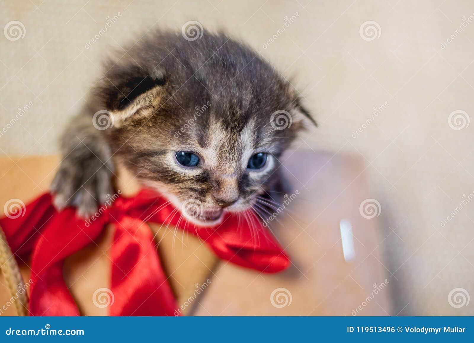 Liten kattunge i en gåvapacke Kattungen är stora pres för en födelsedag