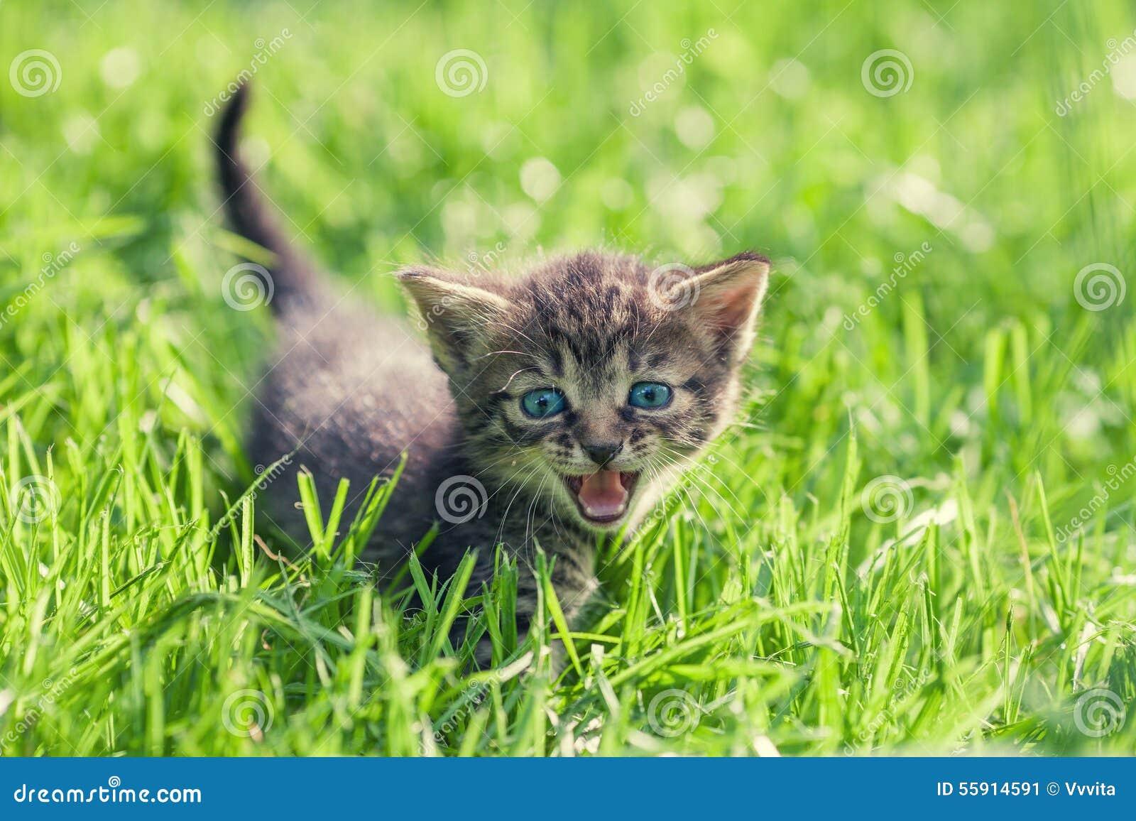 Liten kattunge på grön gräsmatta