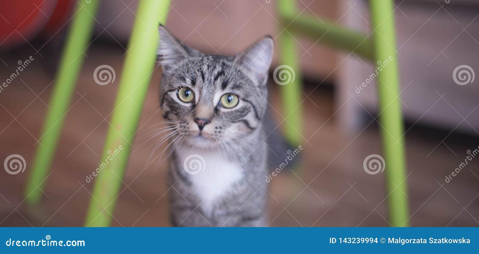 Liten kattunge som ser kameran