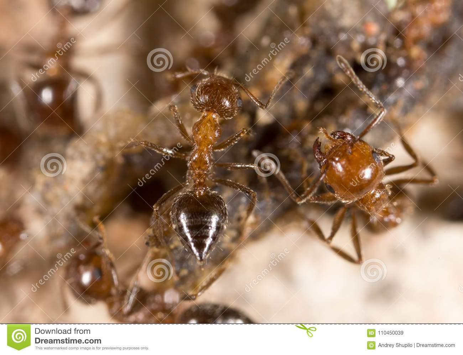 Liten myra i natur Makro