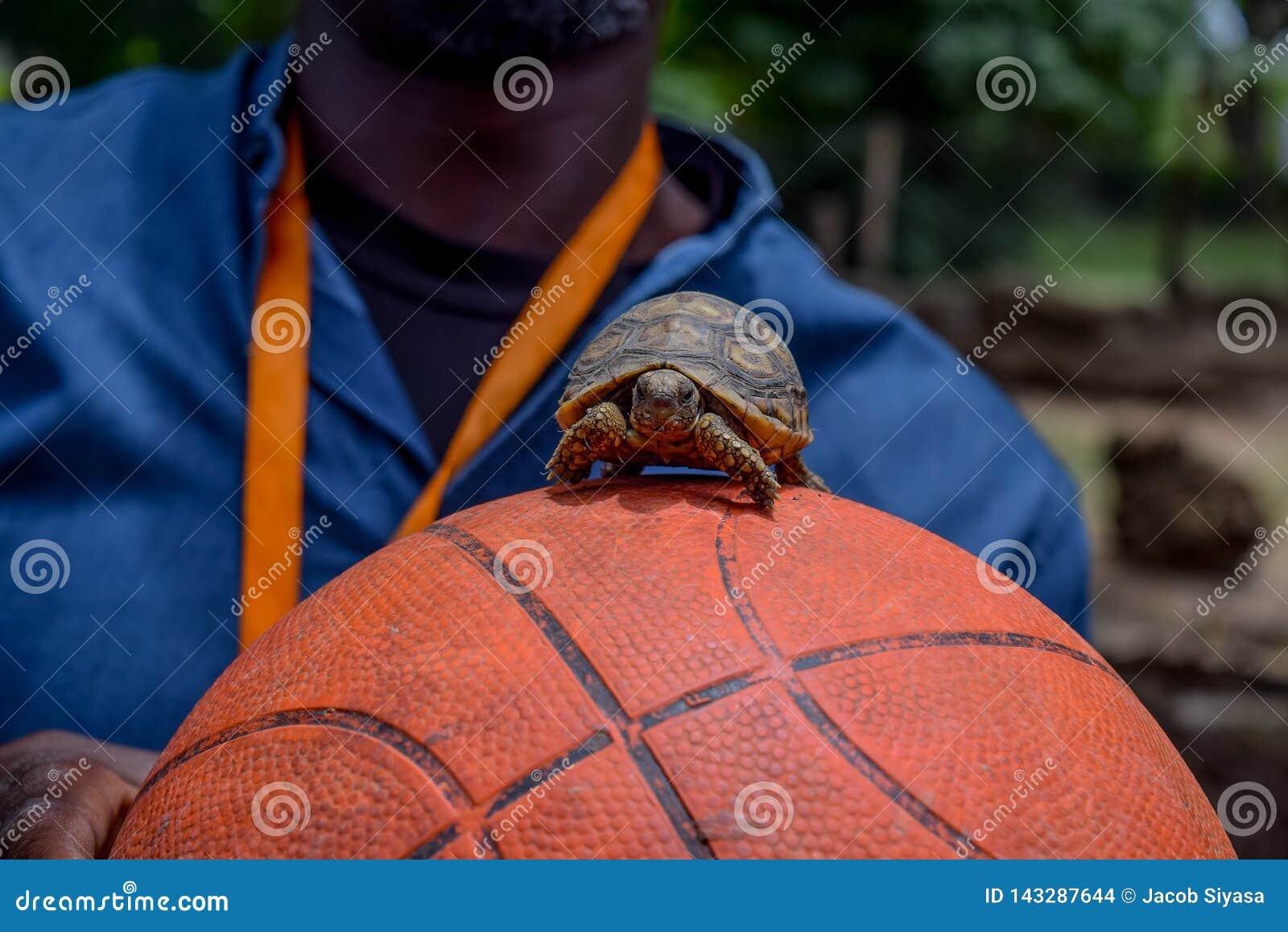Liten sköldpadda