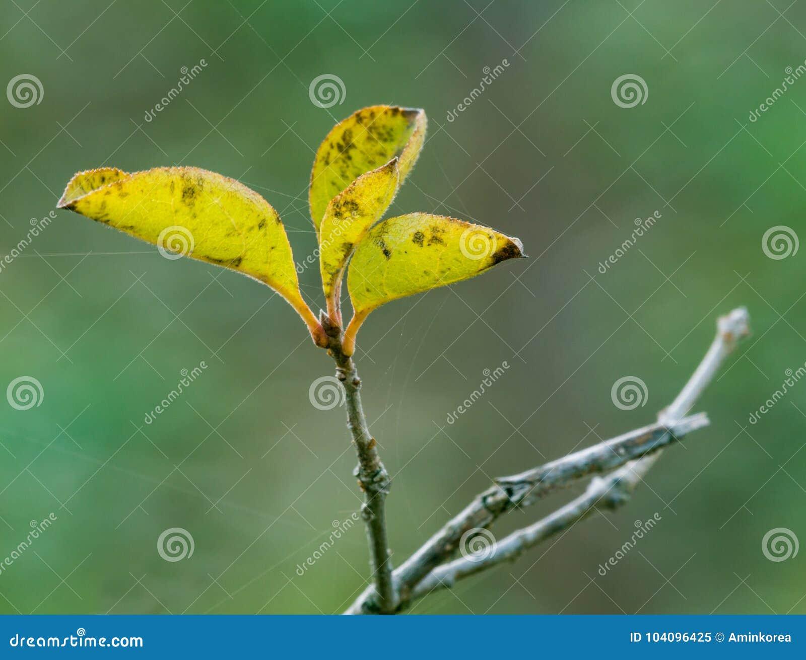 Liten trädfilial med tre lilla gräsplansidor