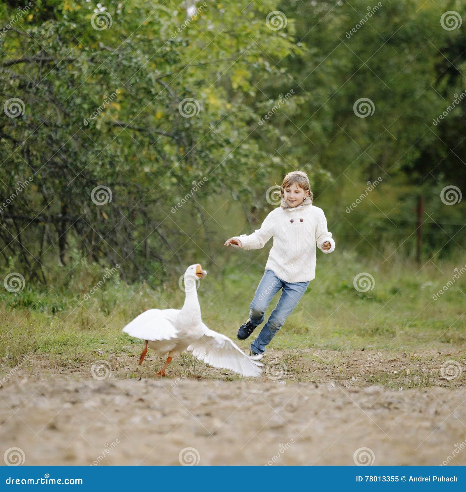 Liten ung flicka i en vit tröja och jeans som jagar gåsen på lantgård Livsstilstående