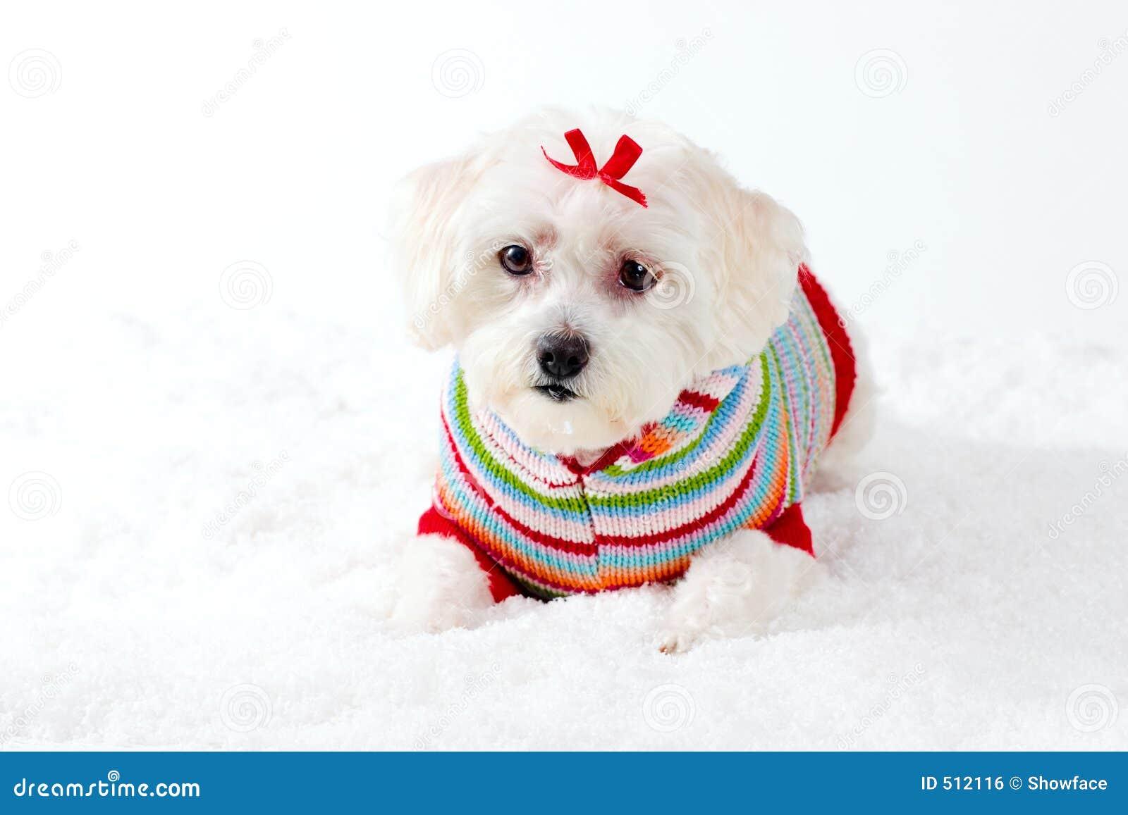 Liten vit vinter för hundplats