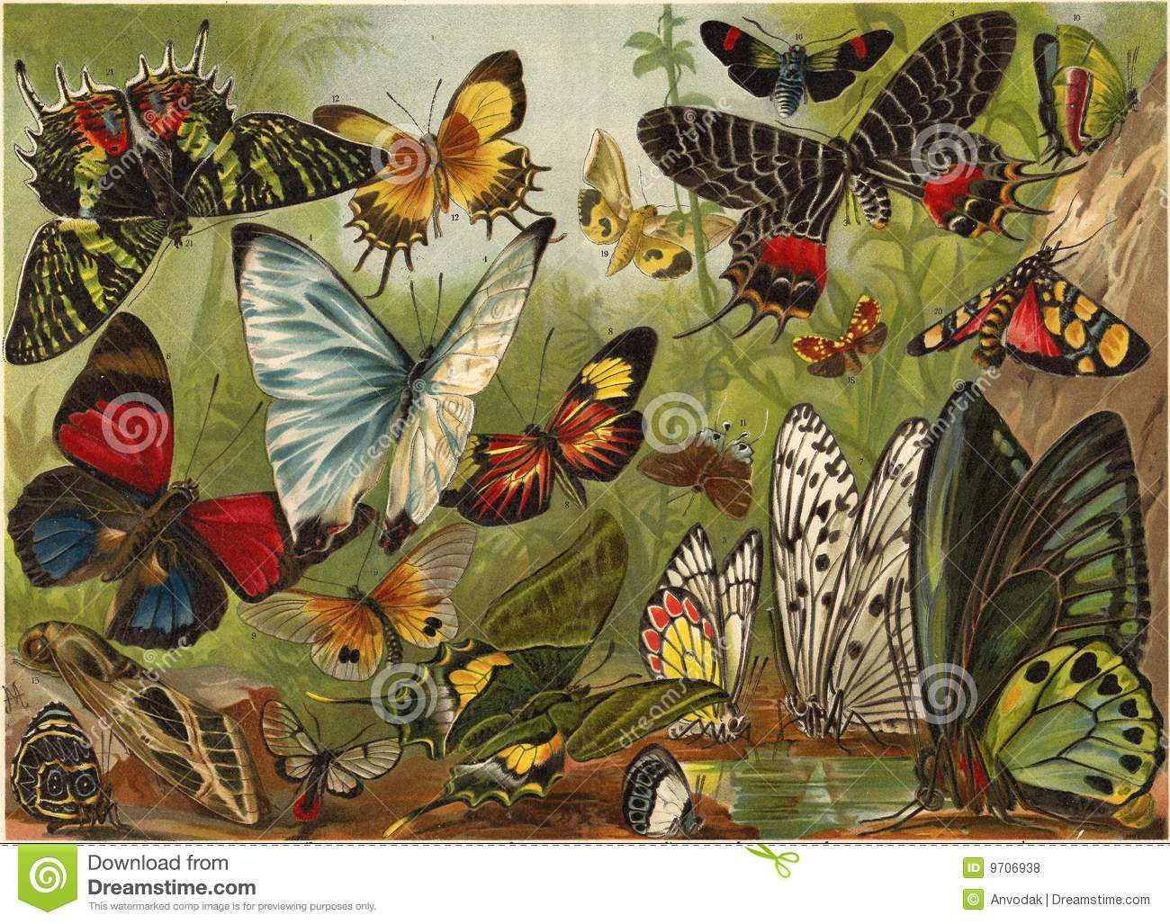 Lithography of butterflies