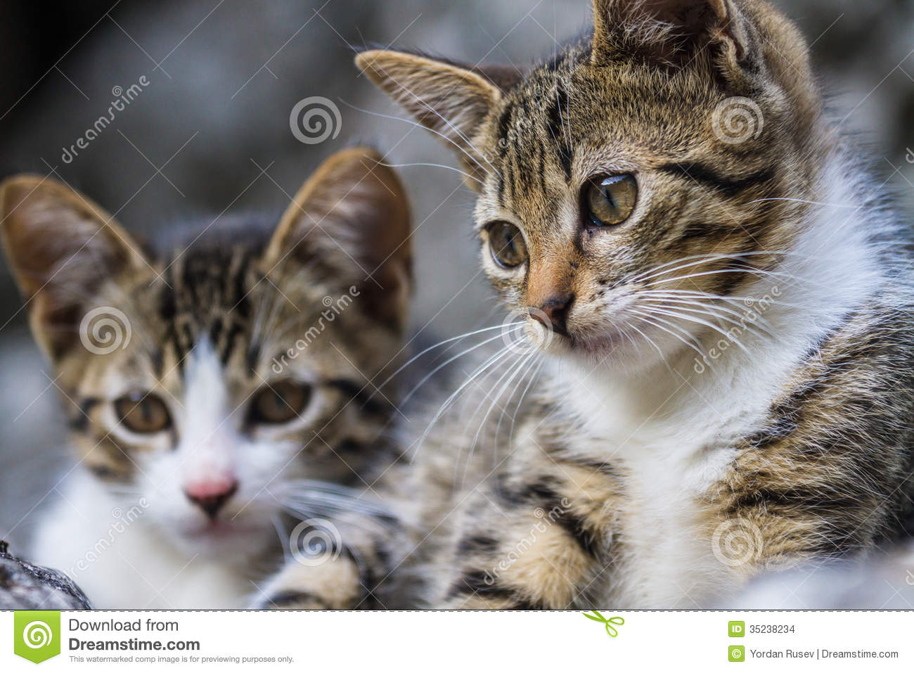 Litle Baby Cats Stock Images - Image: 35238234