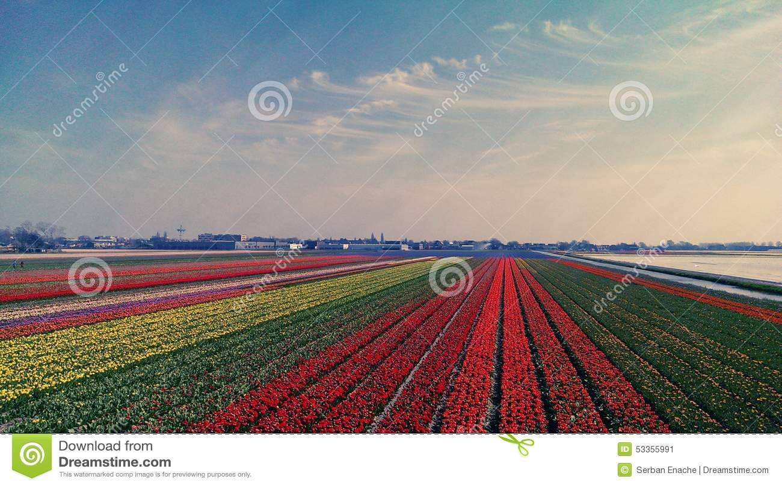Lits de tulipe chez Keukenhof