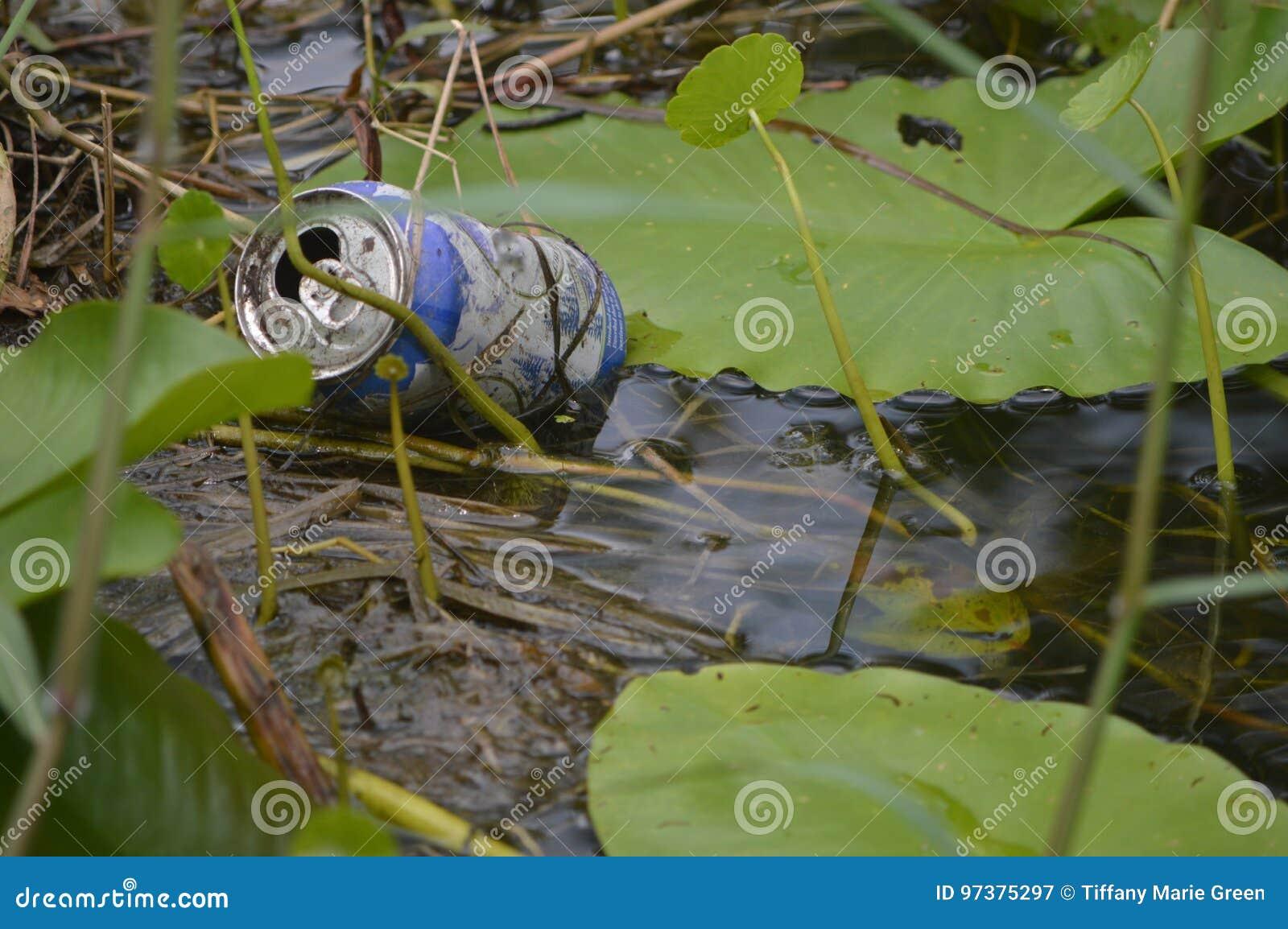 Litter in the Wetlands