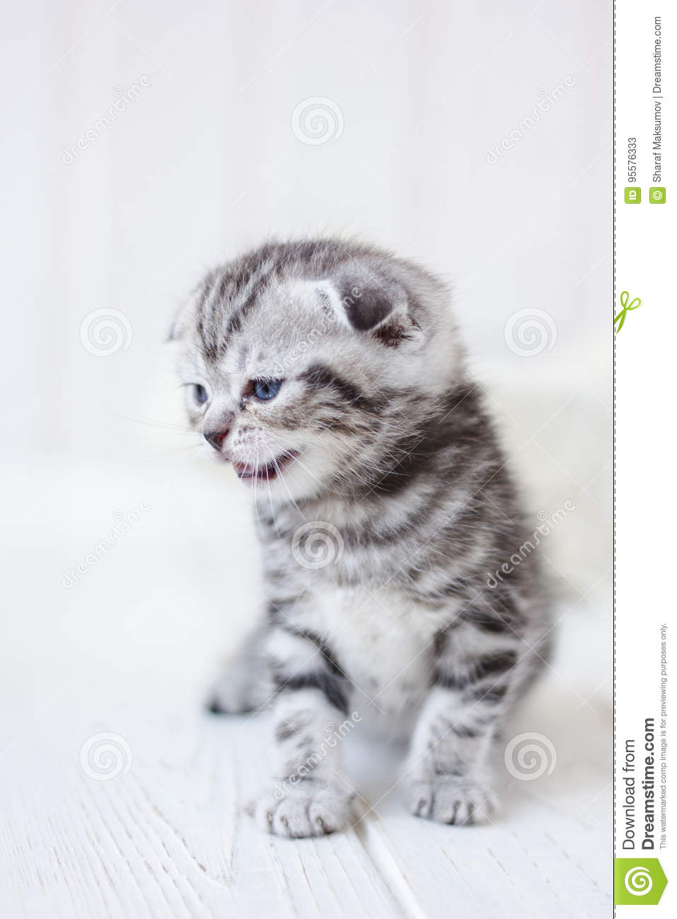 Little Adorable Kitten Meowing