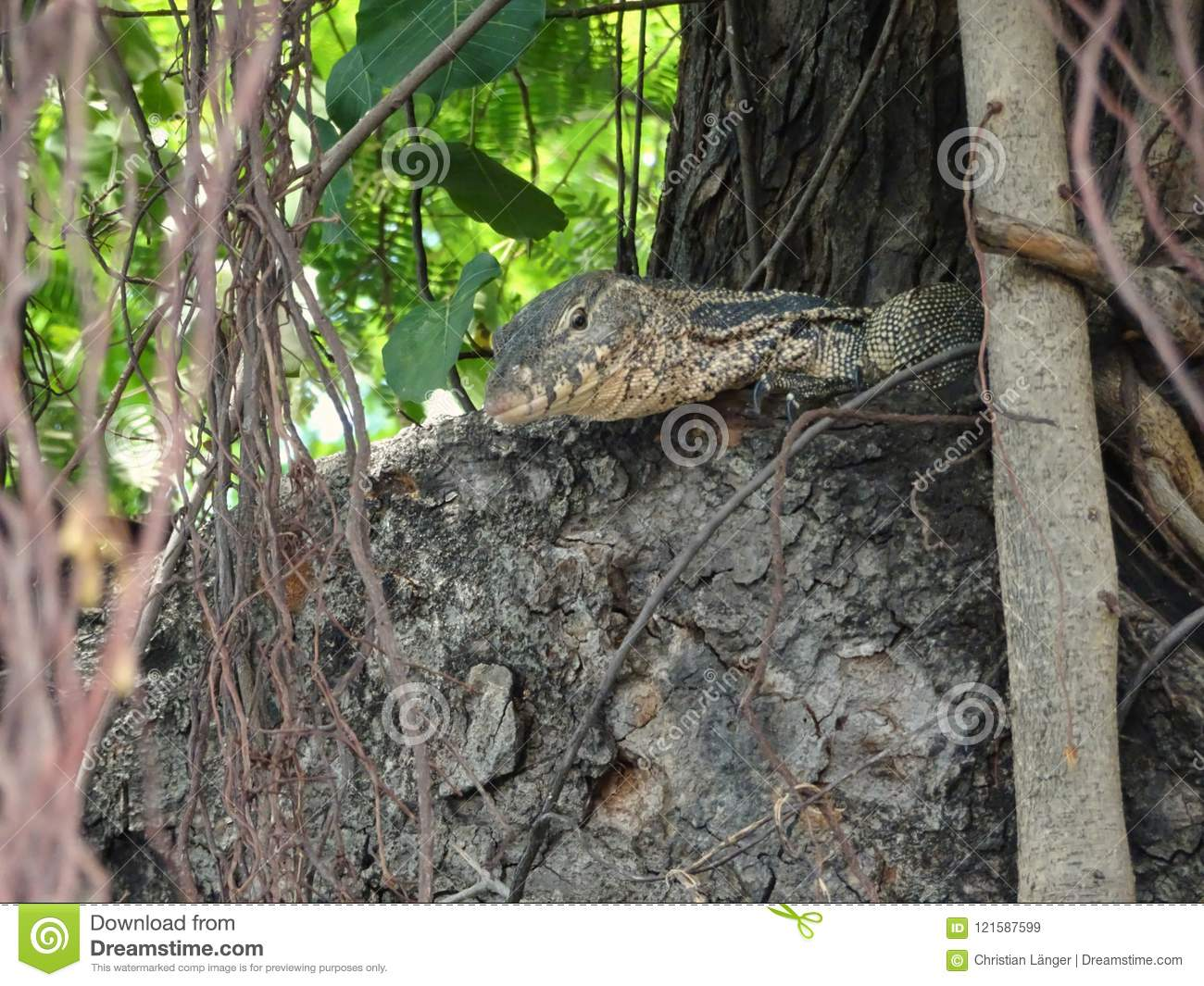 Little asian lizard on a tree in the middle of Bangkok