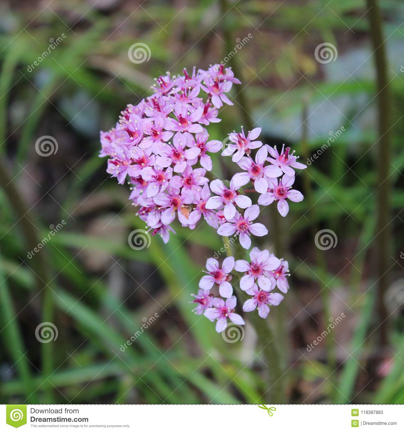 Little beauty in spring stock image image of magic 118387883 little beauty in spring izmirmasajfo