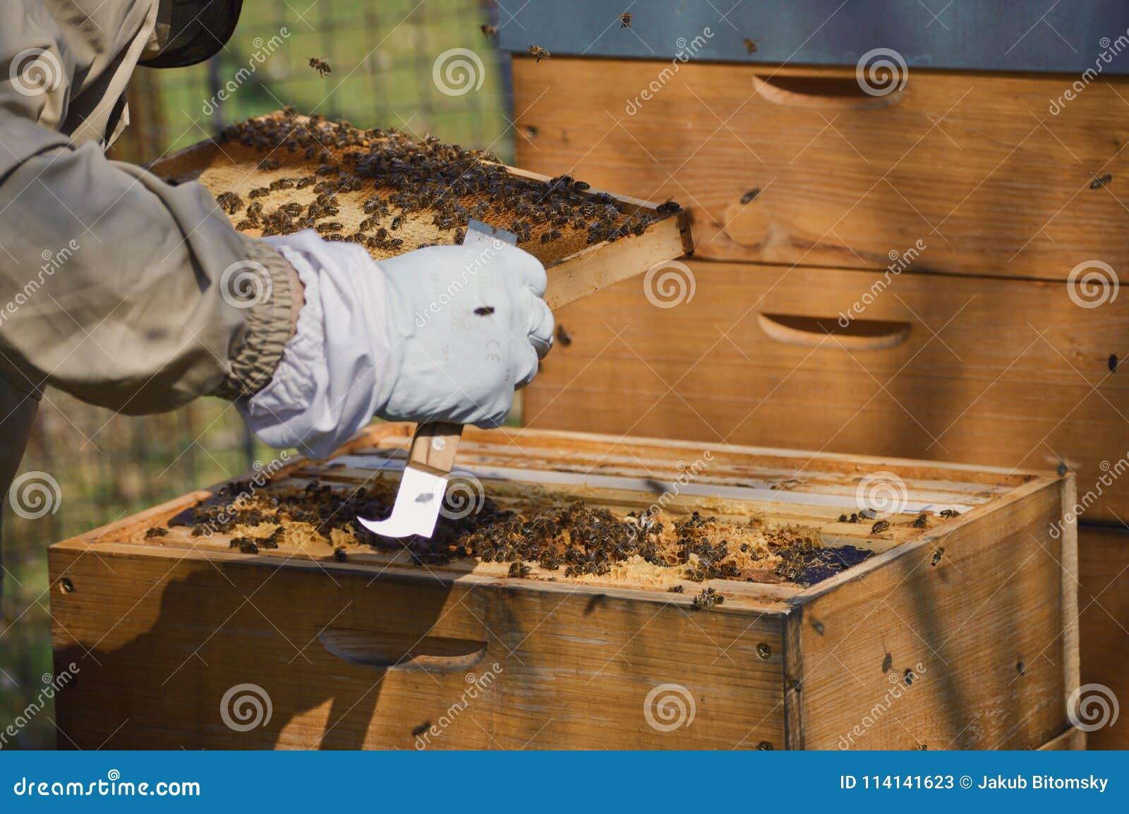 A little beekeeping