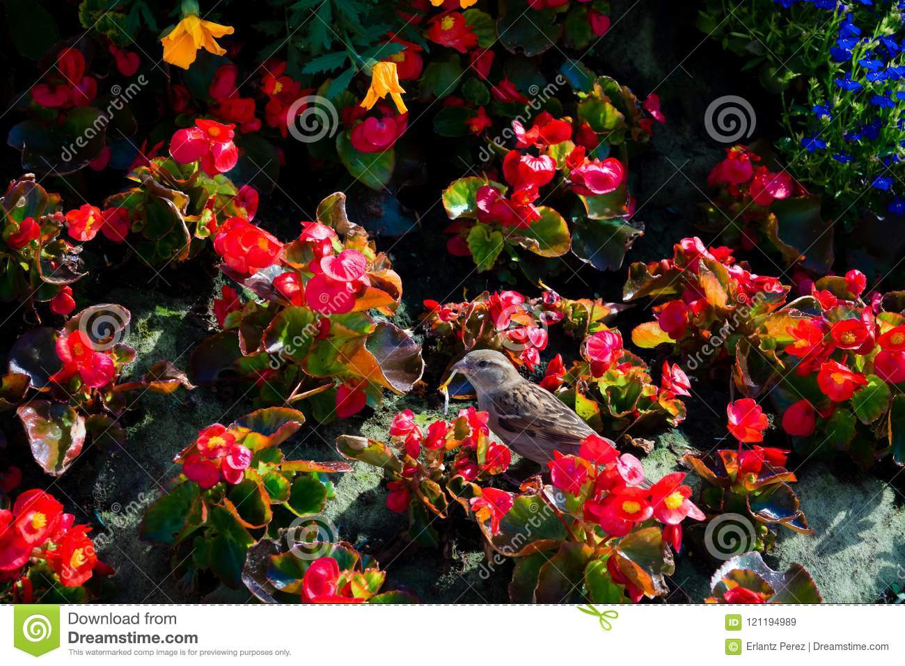 Little bird and red flowers