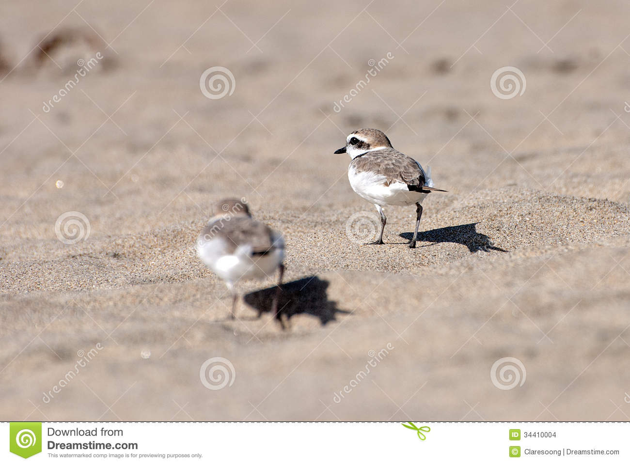 Little birds stock images image 34410004