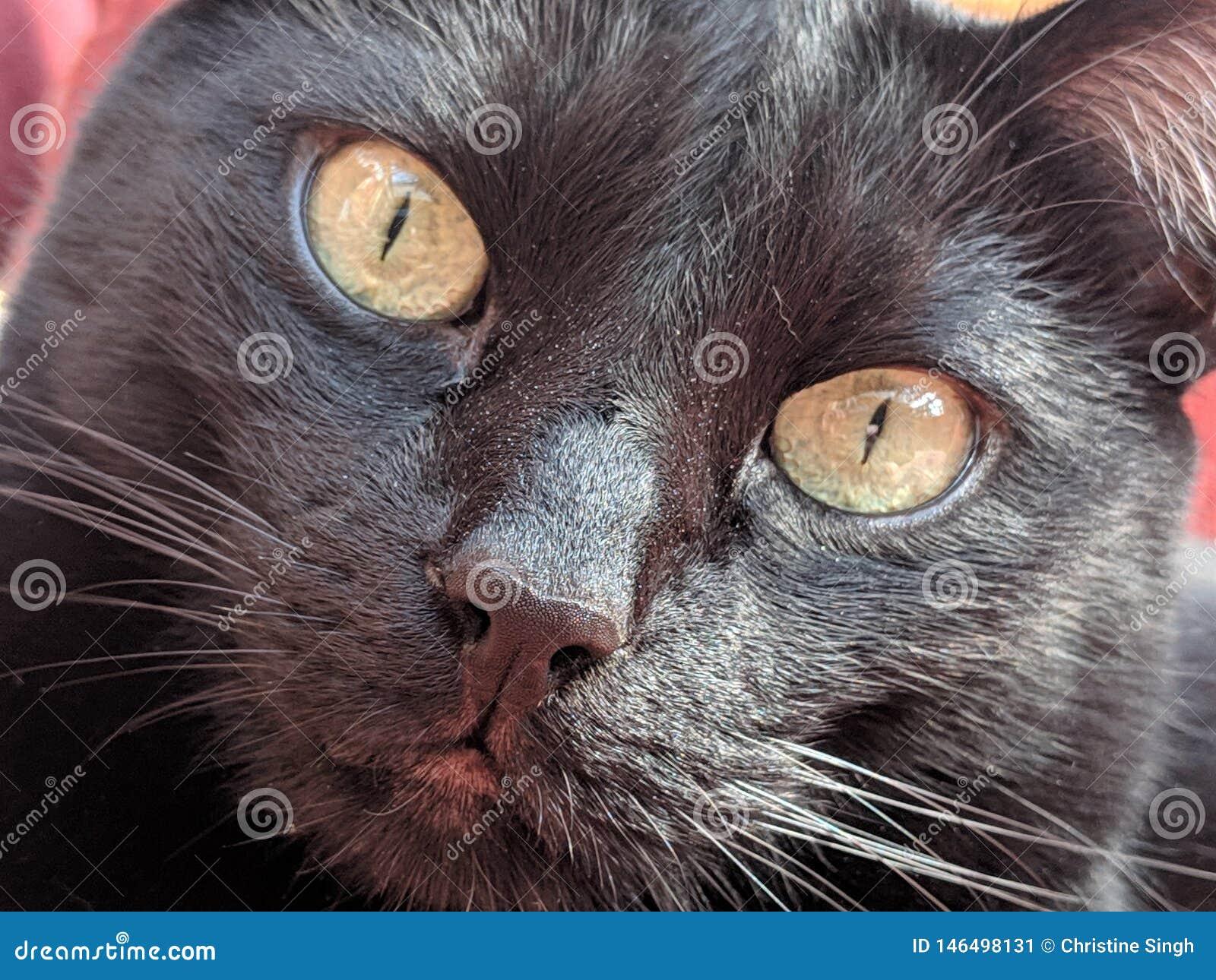 Little black cat watching