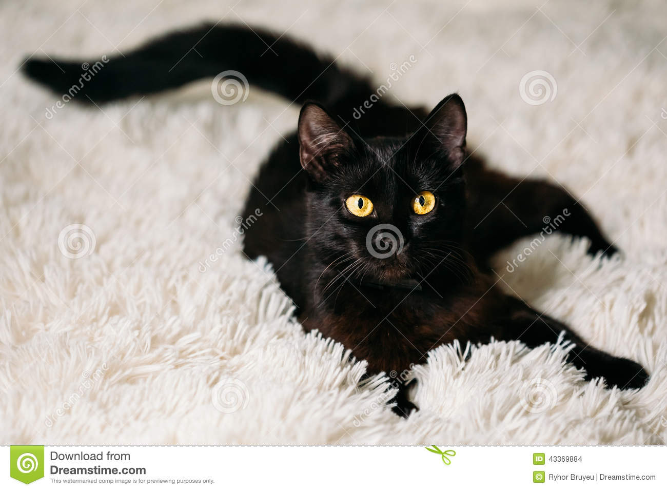 Little Black Kitten On Bed Stock Photo Image 43369884