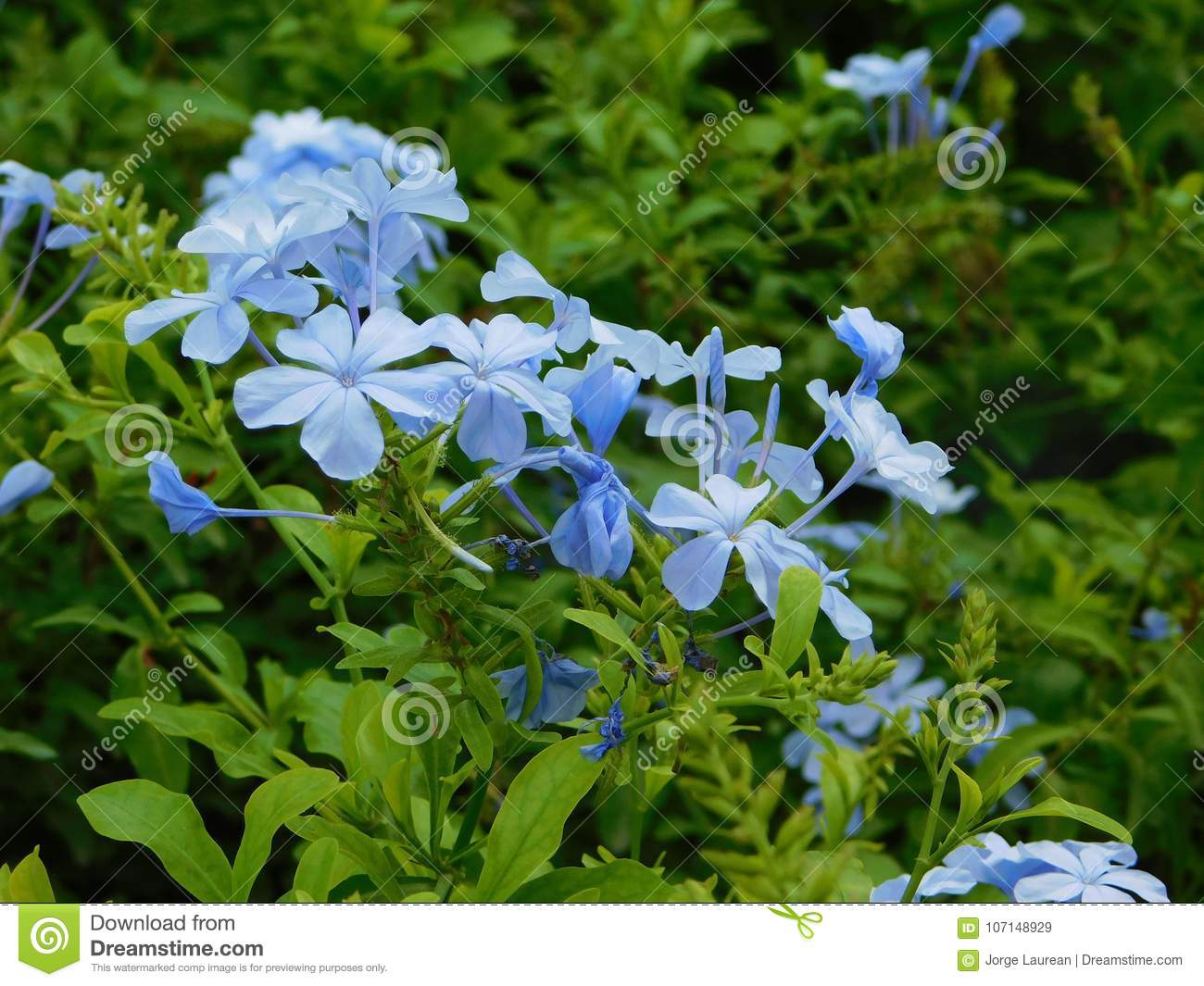 Little blue flowers among green leaves stock image image of light little blue flowers among green leaves izmirmasajfo Choice Image
