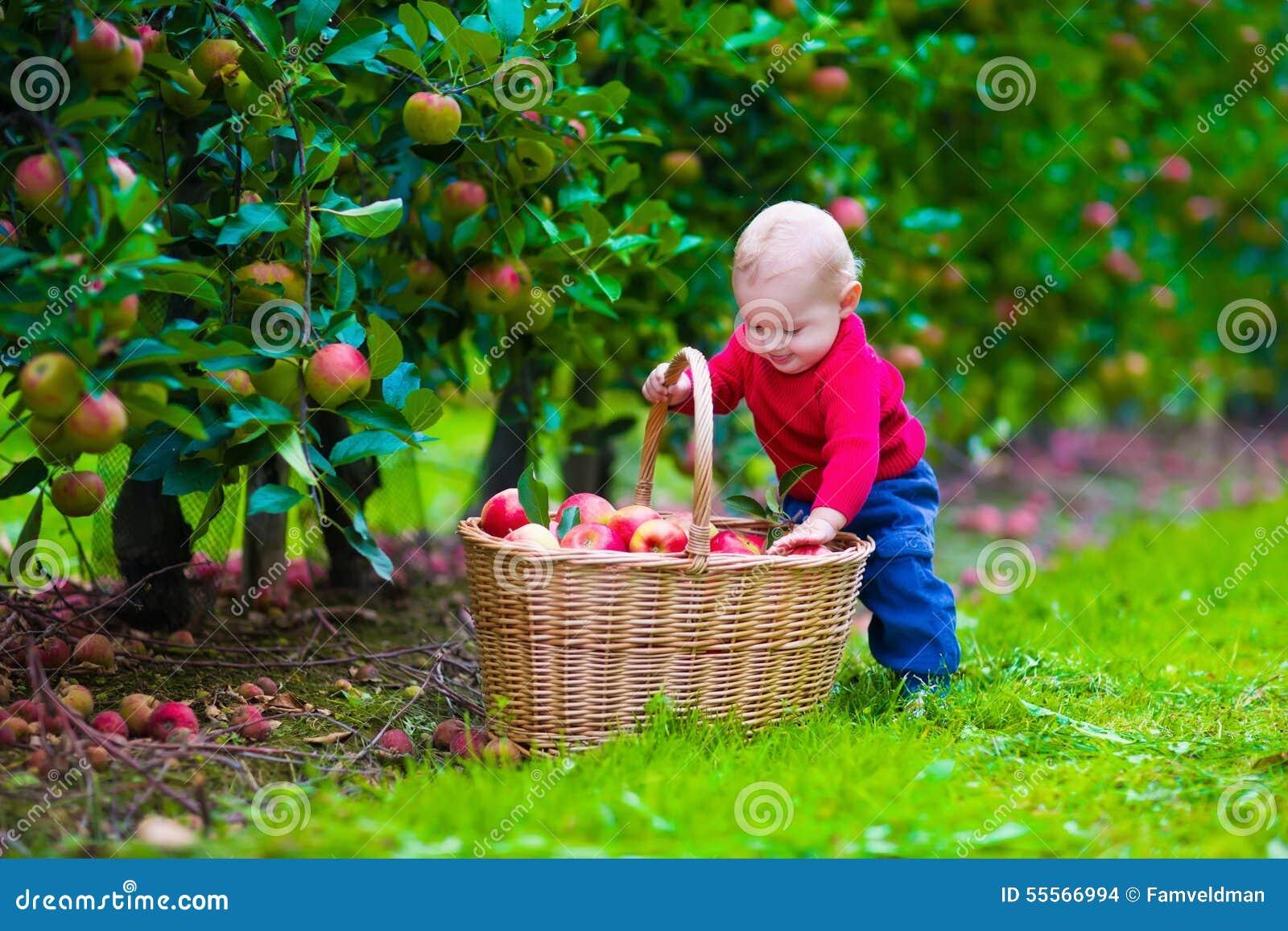 patterson fruit farm fruits basket season 2
