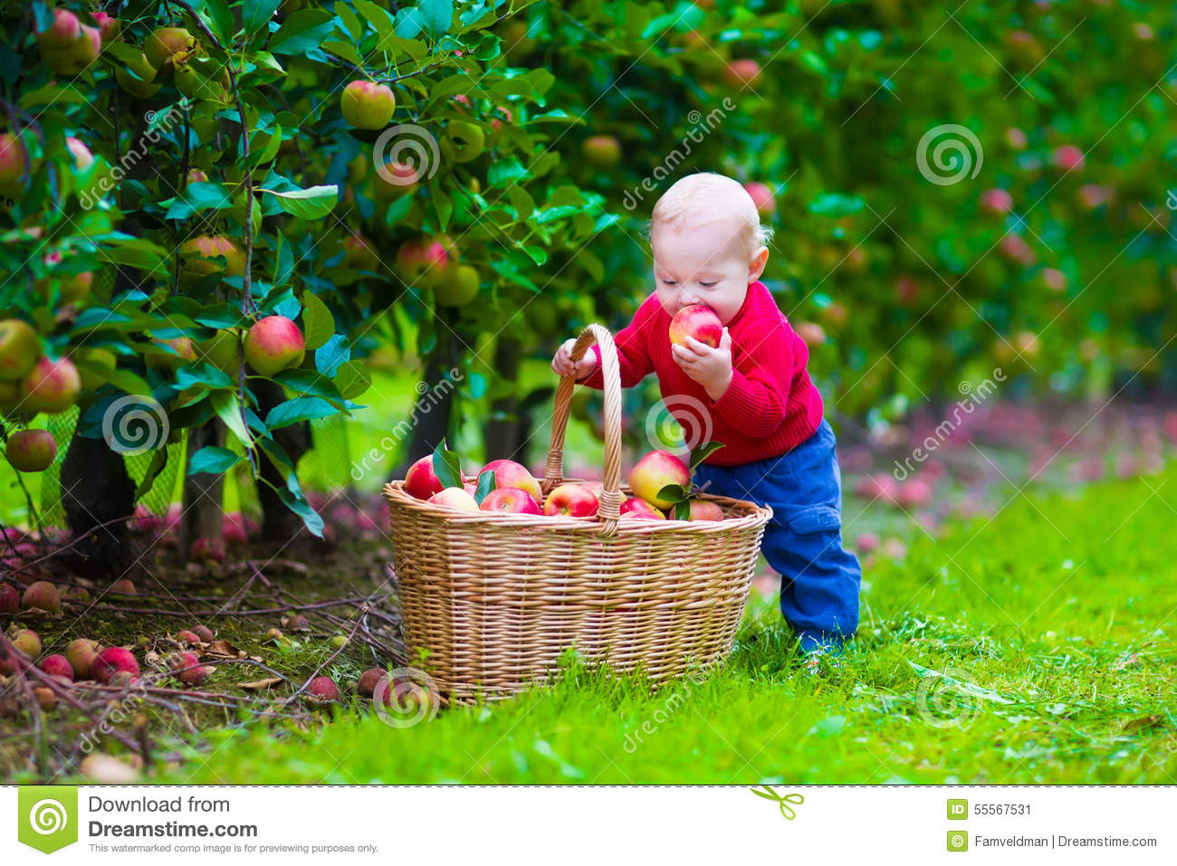 Basket Of Apples Clipart Little Boy With Apple ...