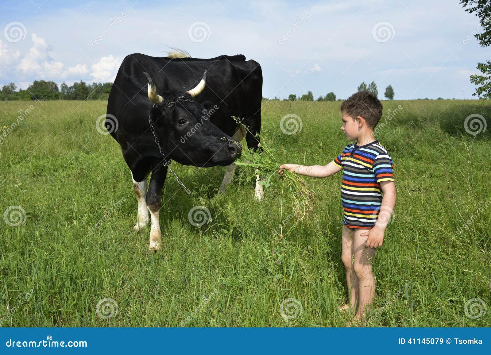 dirty cow boy sex