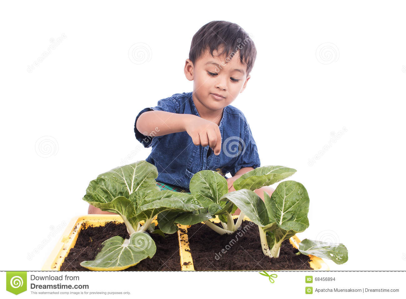 Little boy fertilizer to vegetables in pots