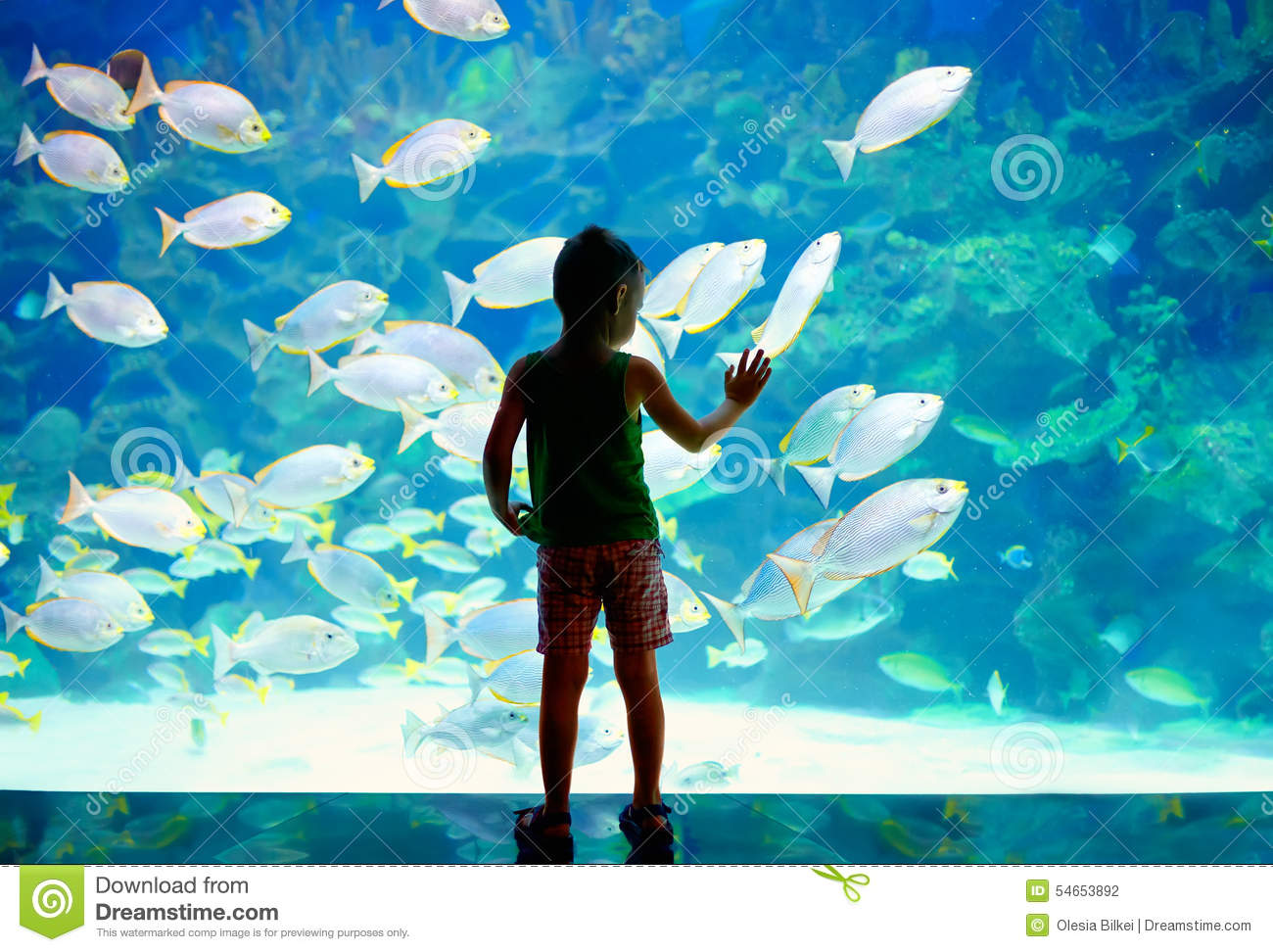 Little boy kid watching the shoal of fish swimming in for Dream of fish swimming