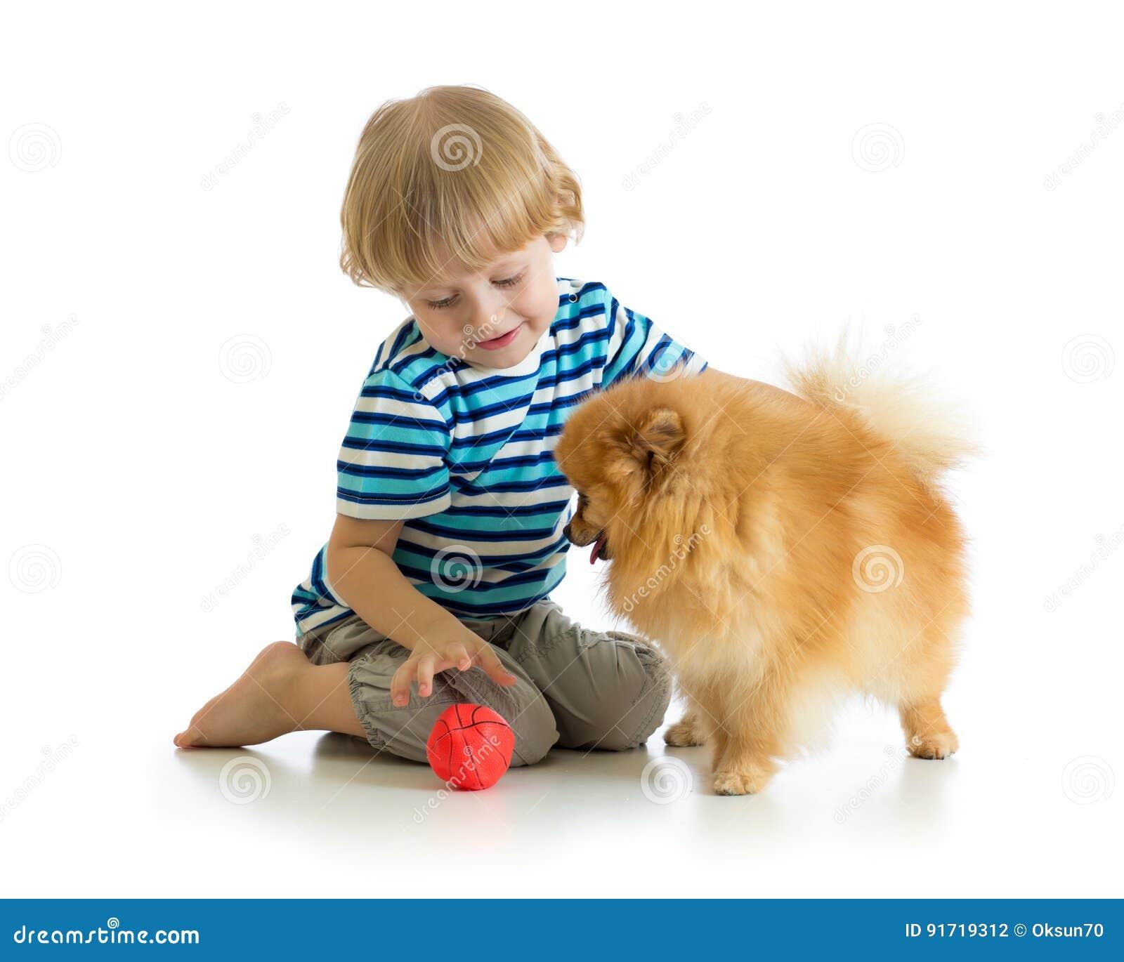 Little boy playing with dog spitz, isolated on white background