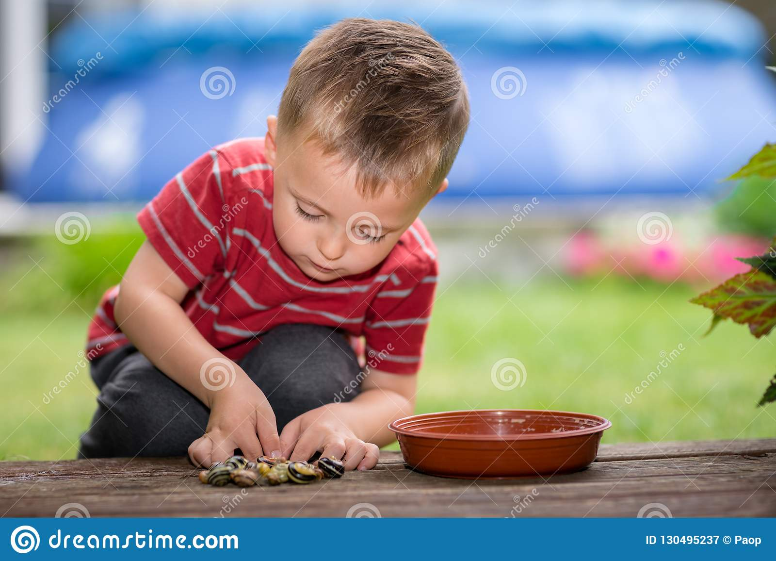 Little boy playing with snails