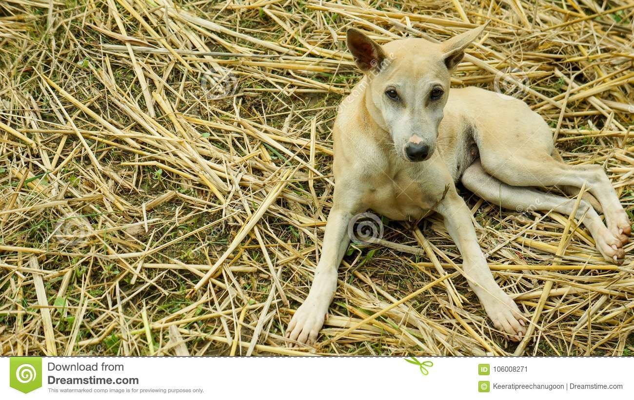Little Brown Puppy In Garden Stock Image - Image of running ...