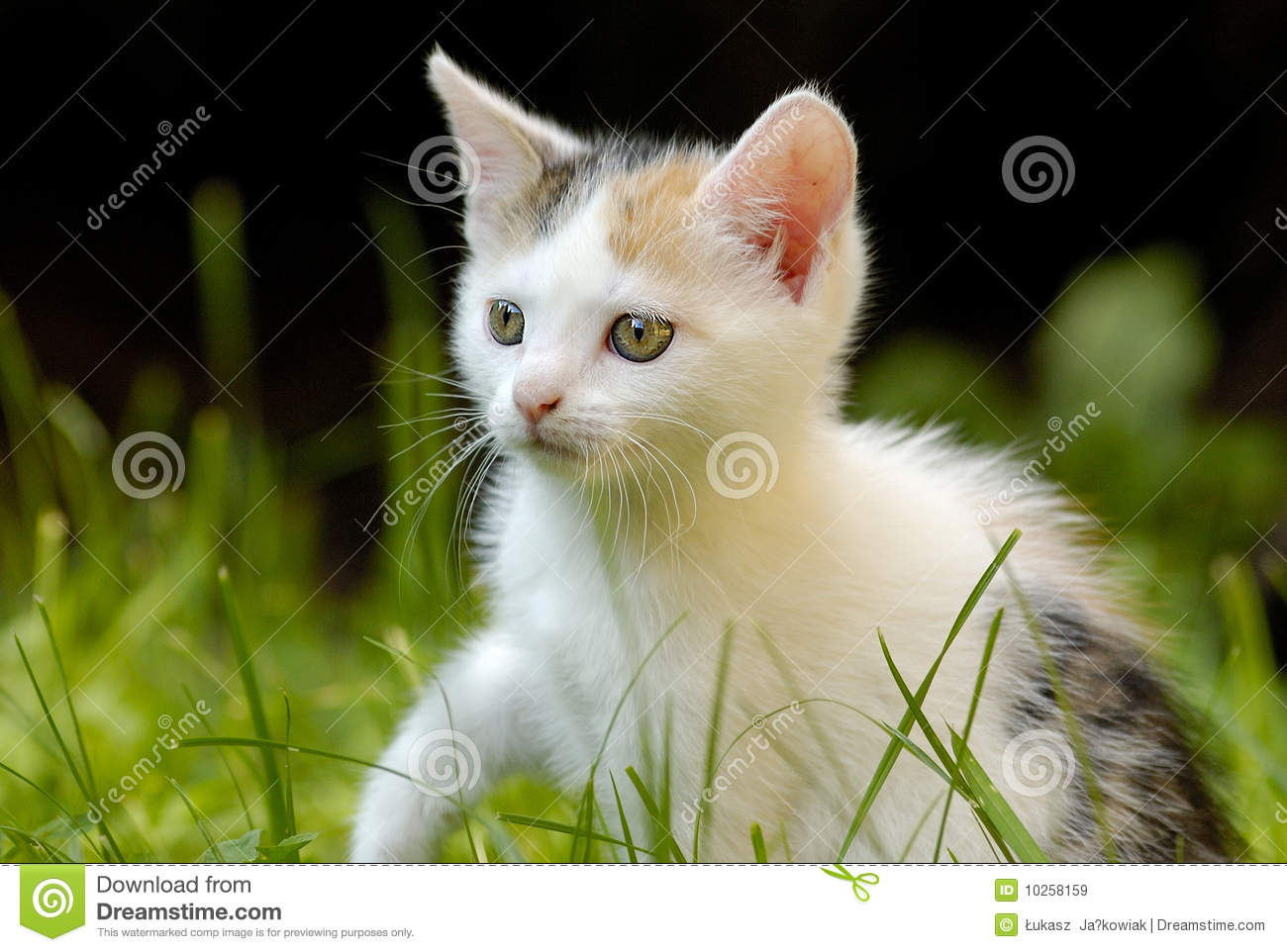 Little Cat With Beauti...
