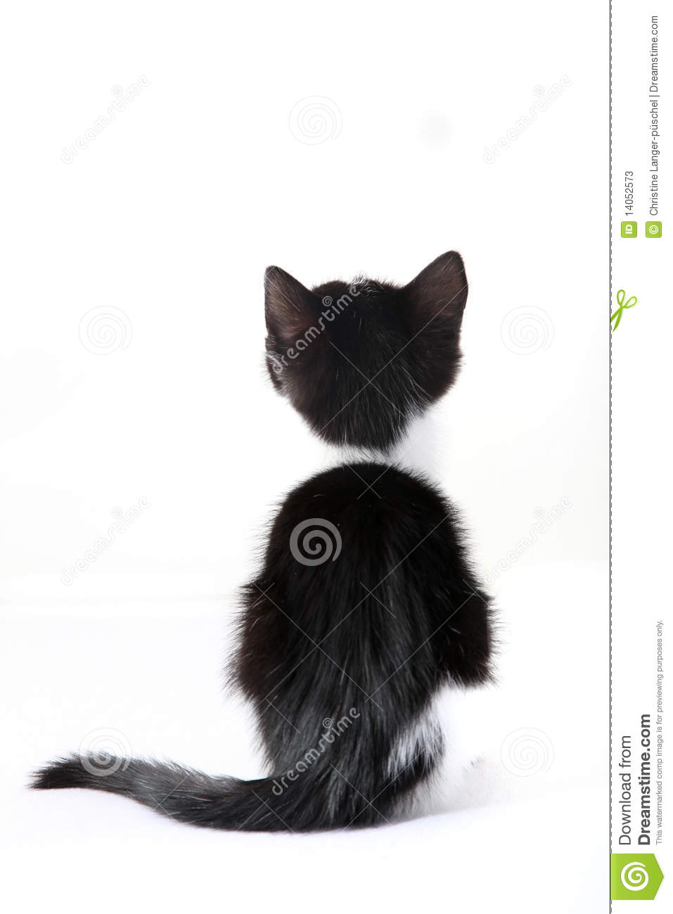 Little Cat From Behind Against A White Background Stock