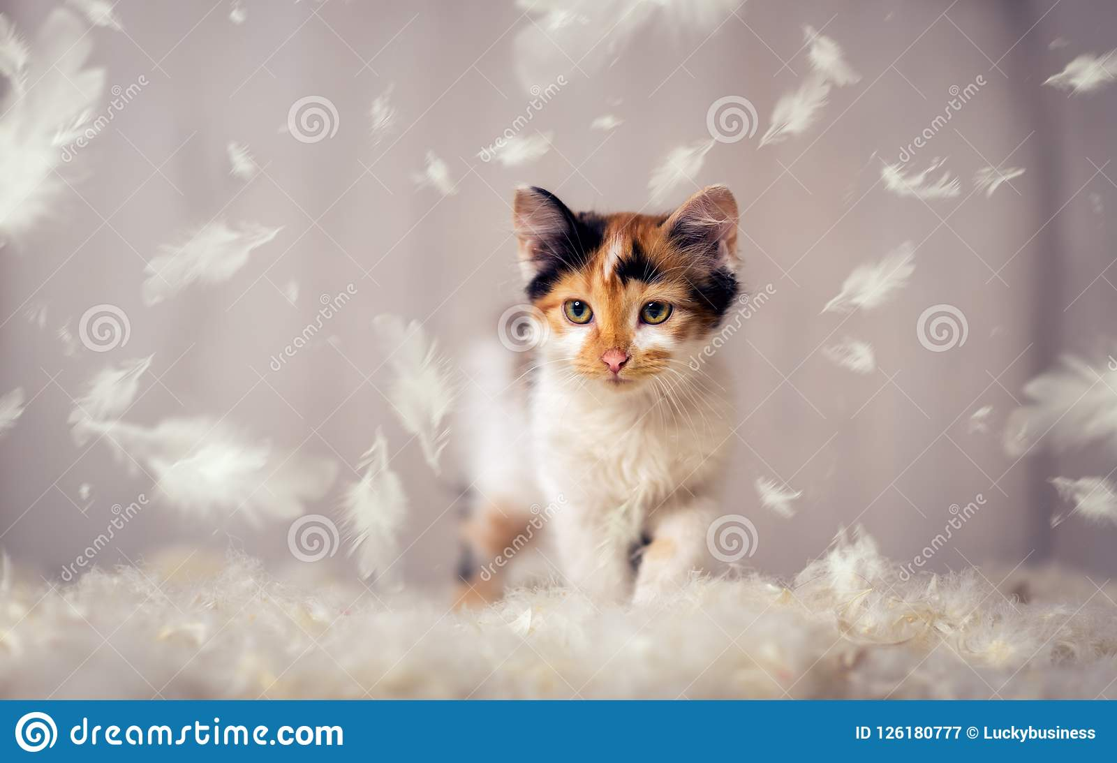 Little cat and feathers