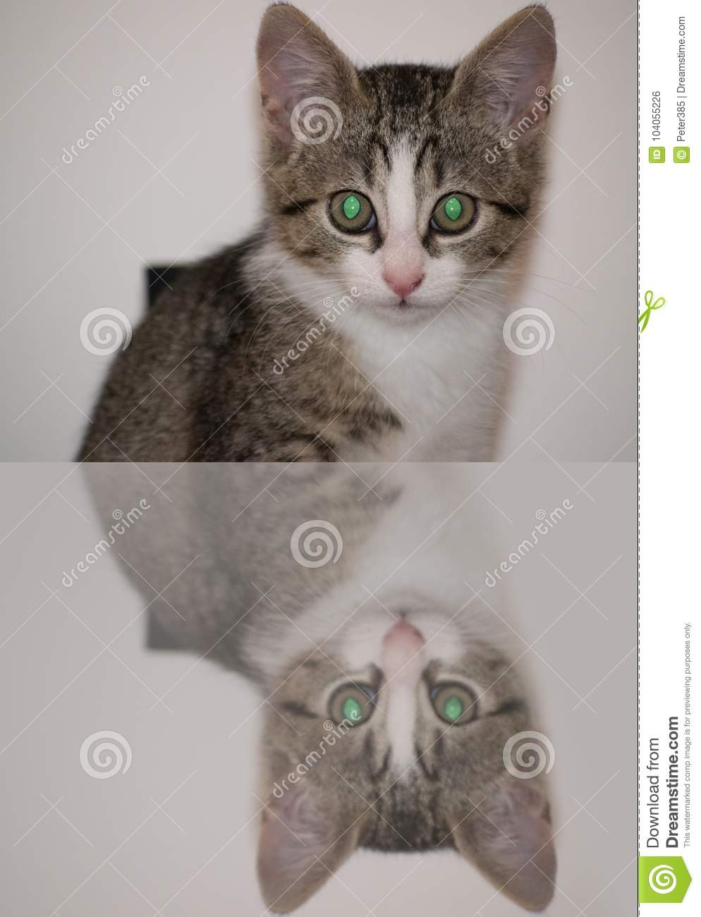 Download Little Cat With Green Eyes. Stock Photo - Image of curious, building: 104055226