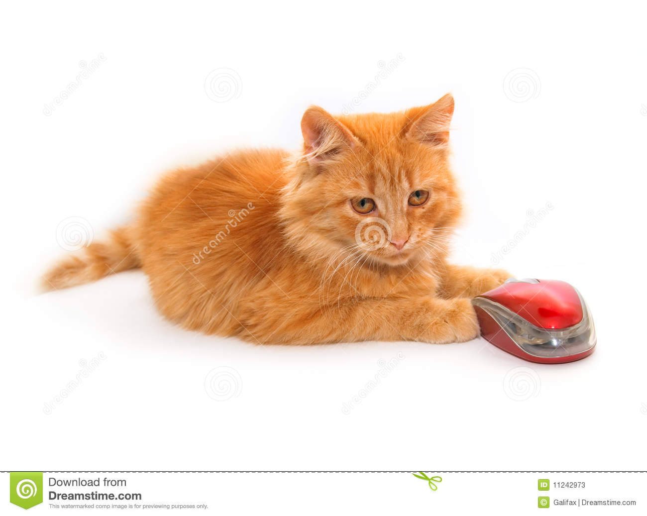 Little cat with mouse