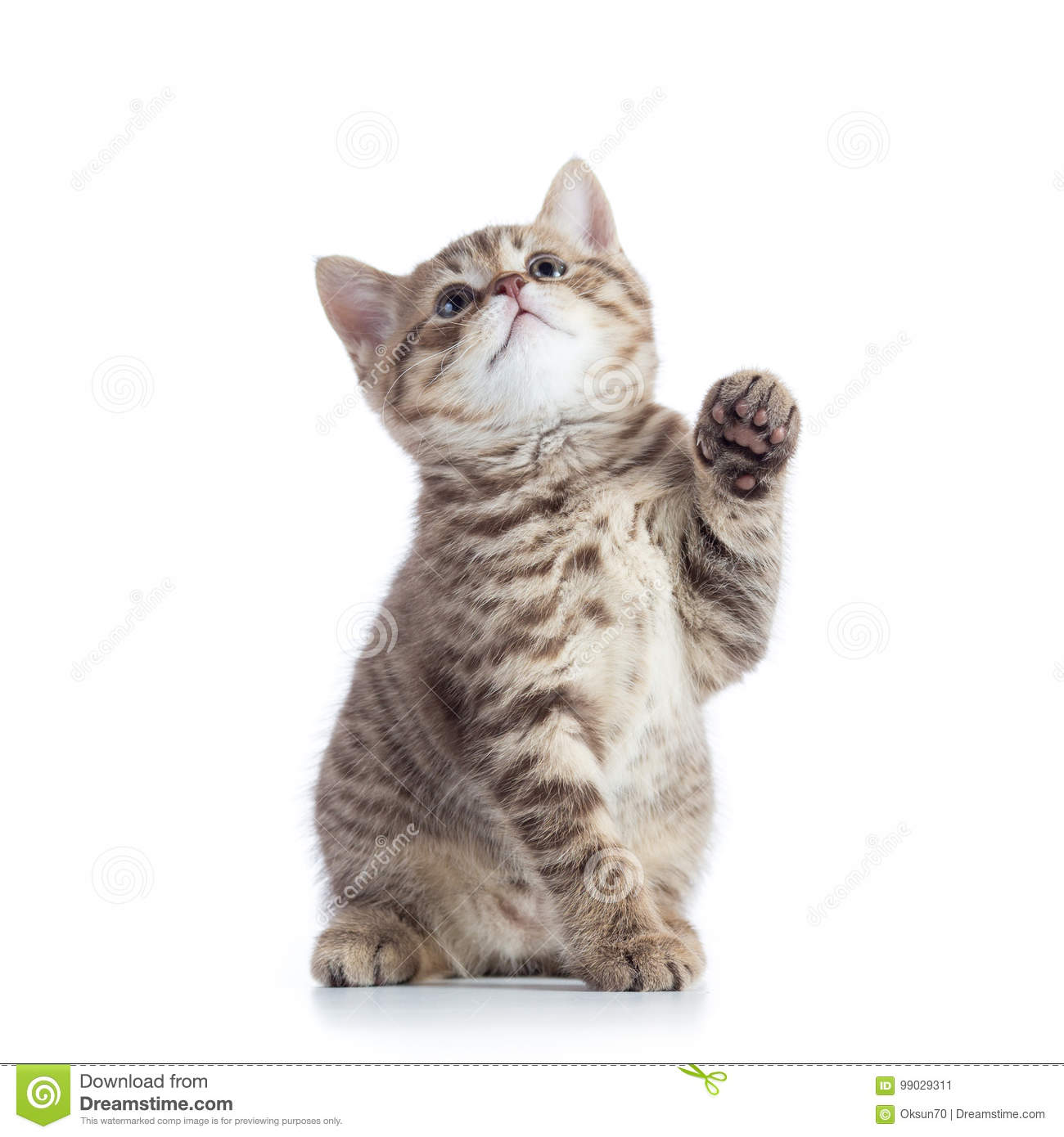 Little cat with raised paw
