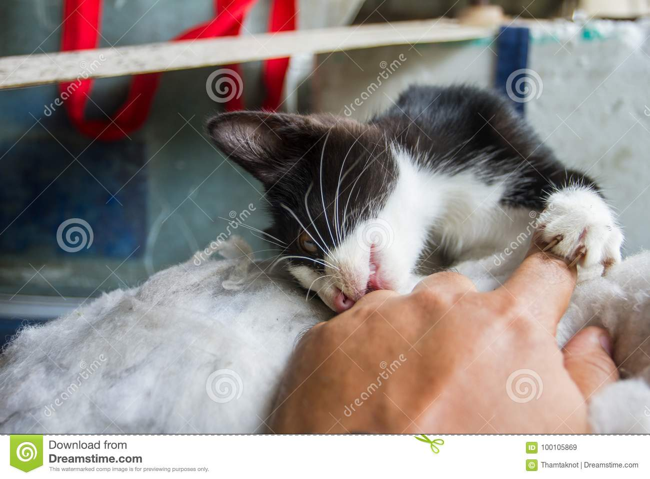 Kitten bites your finger, it is fun to play, which is in the background.